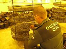 Descubren un secadero de marihuana en una nave industrial de Granada