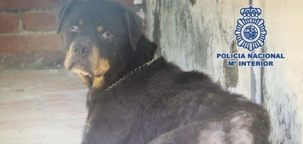 Esta perra espera en Almuñécar una familia adoptiva tras permanecer encerrada durante años en una terraza