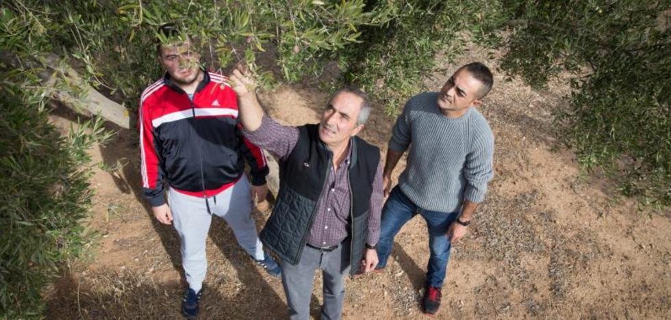 Alarma en los pueblos del olivar, donde habrá 300.000 jornales menos
