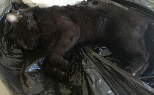 Investigan la muerte a golpes de un cachorro de gato en El Toyo