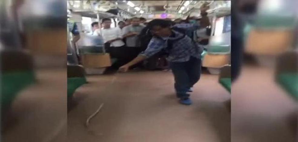 Furor por el hombre que mata una serpiente con las manos en un tren abarrotado