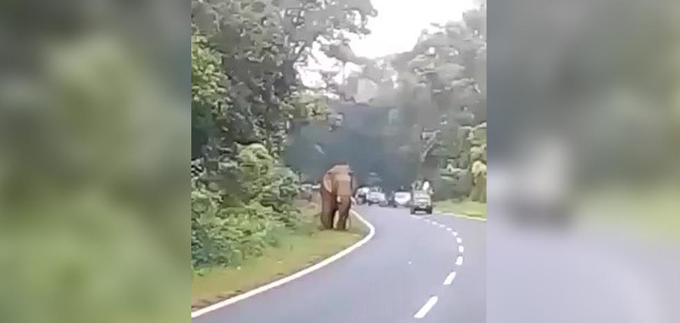 Un elefante mata a un hombre que se le acercó para hacerle una foto