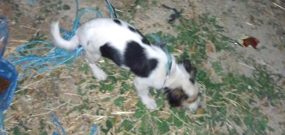 Nuevo caso de maltrato animal en Jaén con un perro atado con síntomas de asfixia, pero salvado