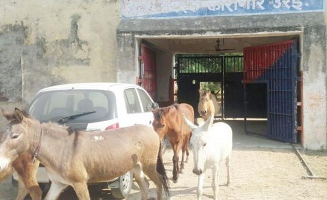 Encierran a 8 burros en una cárcel y la destrozan