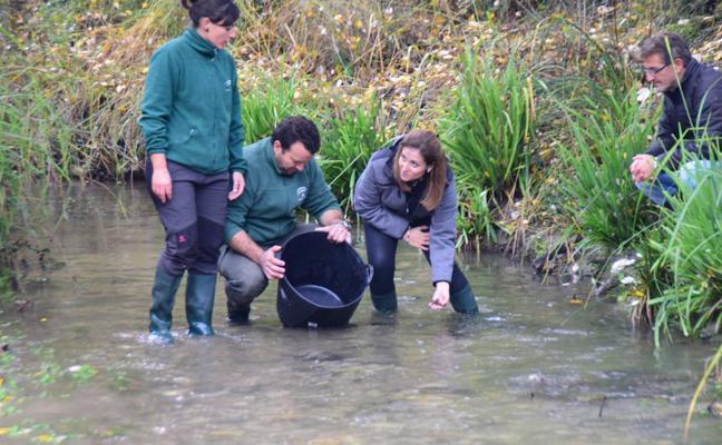 La Junta impulsa la recuperación del cangrejo autóctono de río en el Darro