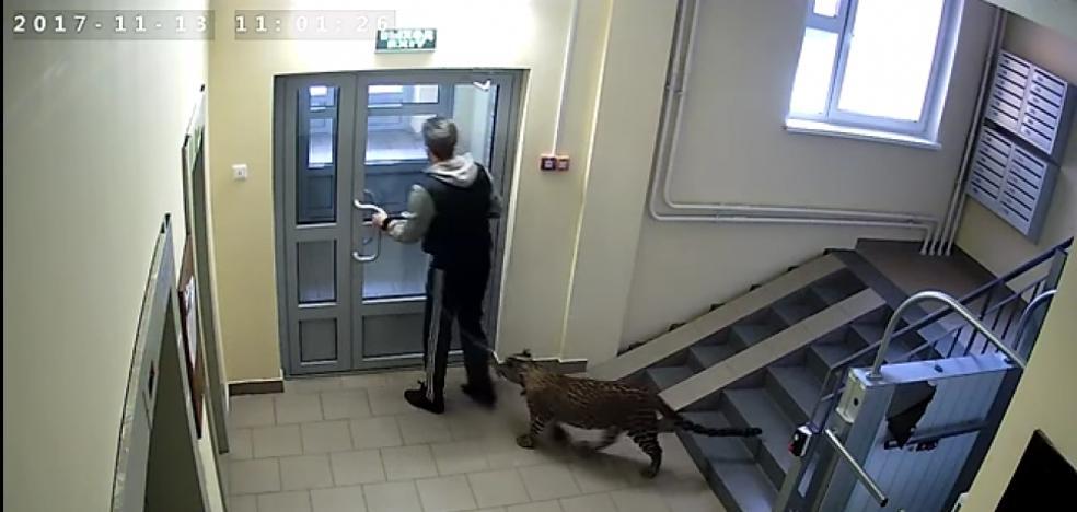 Sus vecinos quieren denunciarlo por tener un leopardo como mascota
