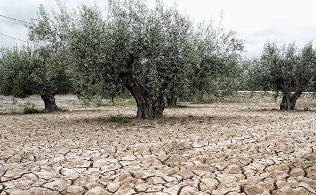 La CHG pide al fin al Gobierno que declare la sequía tras dos meses seguidos en emergencia