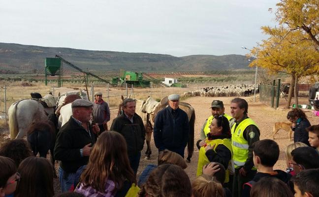 Cien escolares conviven durante una jornada con pastores trashumantes y y su ganado