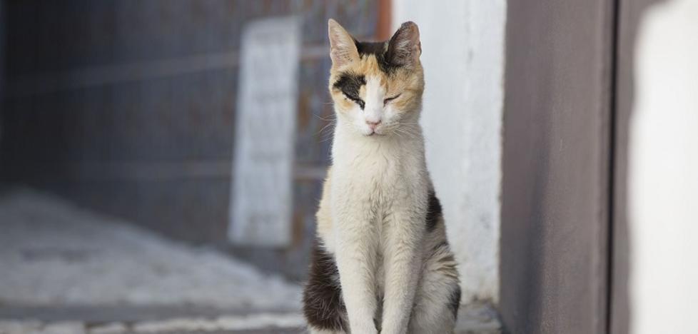 Cádiz sólo permitirá a 40 personas alimentar a gatos callejeros
