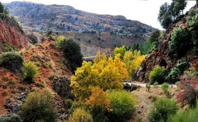 10 bosques para 'perderte' en otoño