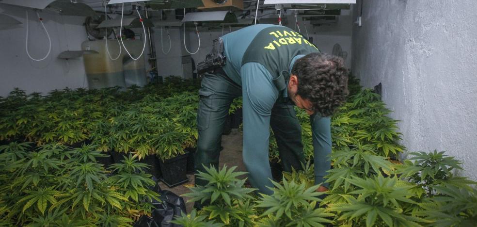 La industria de la marihuana hunde la mafia del hachís