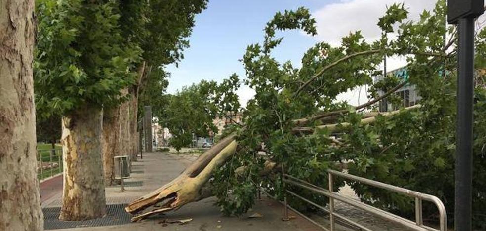 Alerta naranja en Granada por vientos de hasta 100 kilómetros por hora en la provincia