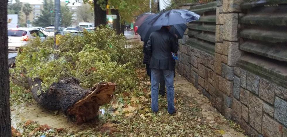 Atendidas un centenar de incidencias de madrugada por el temporal de viento y lluvia en Andalucía