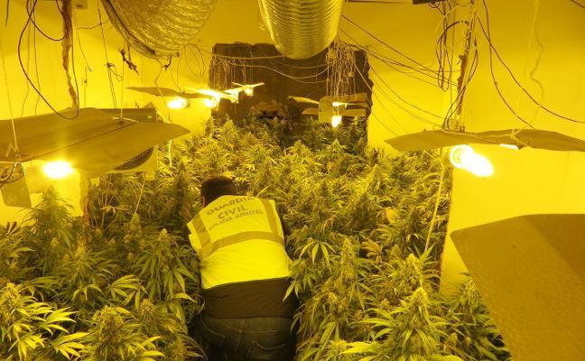 La marihuana destrona al hachís