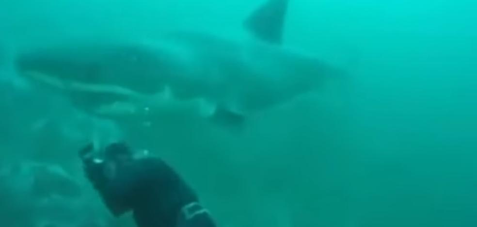 Se salva por los pelos de que un tiburón le arranque la cabeza