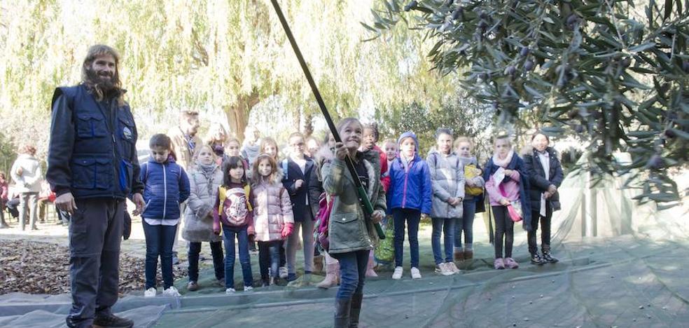 El Parque de las Ciencias acerca su particular recogida de la aceituna a los visitantes