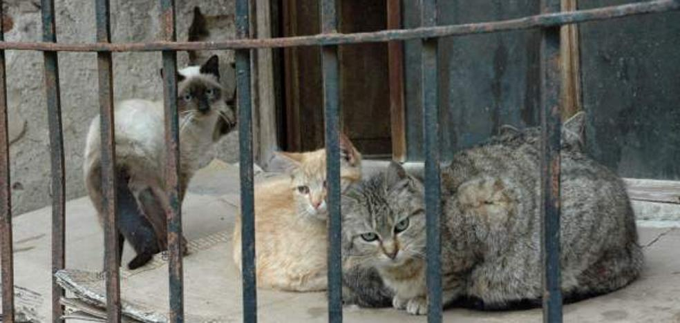 Piden 9 meses de cárcel a un hombre y una mujer por envenenar a 8 gatos de su vecina
