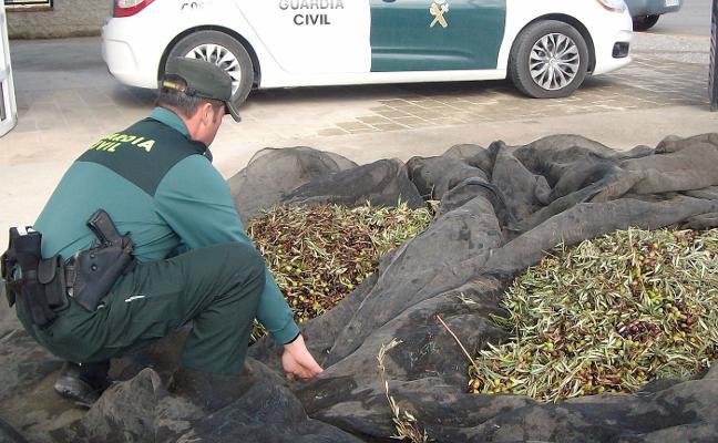El campo se blinda contra el robo de aceituna en una campaña que facturará 342 millones euros