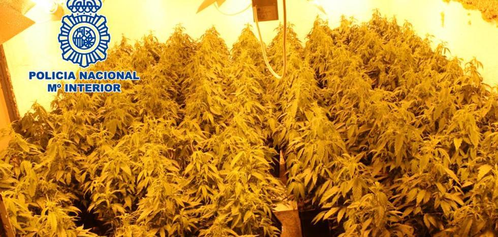 Detenidos madre e hijo con 551 plantas de marihuana en dos casas de Granada