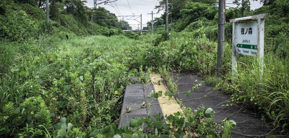 Comienza la limpieza radiactiva en la ciudad que alberga la planta de Fukushima