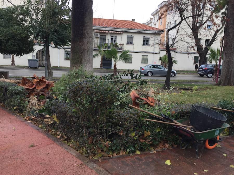 Jaén cierra todos sus parques por el fuerte viento