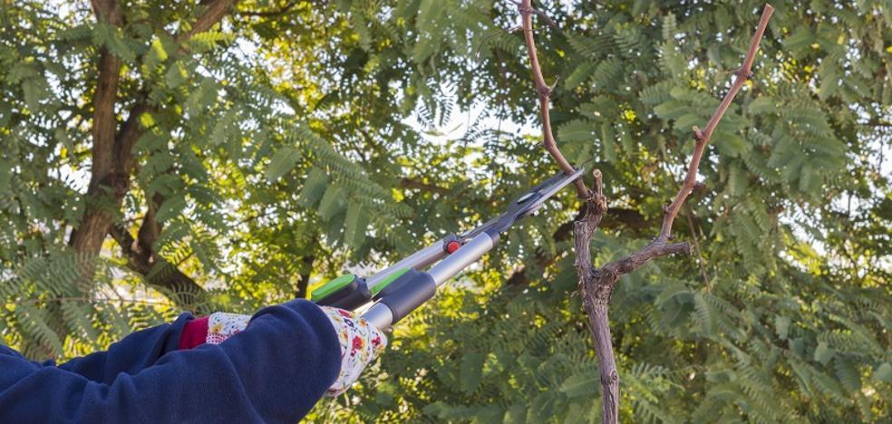 El Supremo multa a un hombre por talar sin permiso un árbol de su parcela