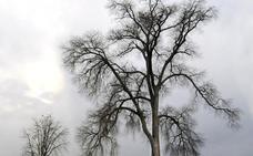 El árbol de los inocentes
