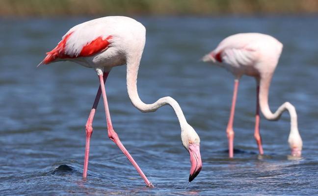 El Parque Cabo de Gata celebra su 30 aniversario con un calendario centrado en sus aves