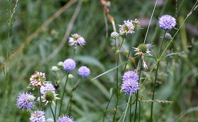 Confirmada la existencia de una nueva especie de flora en Sierra Nevada