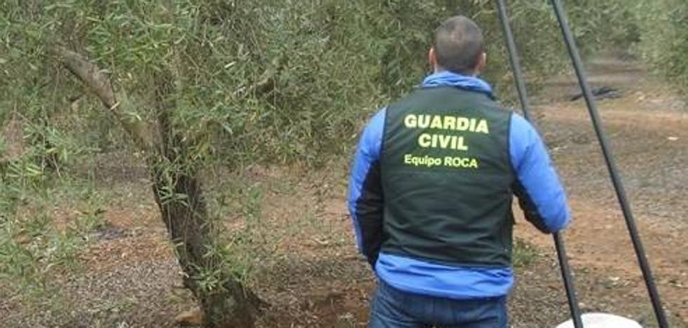 Tres detenidos por robar 20 toneladas de aceituna en la provincia de Jaén