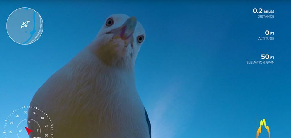 Una gaviota robó una GoPro y el resultado es este impactante vídeo