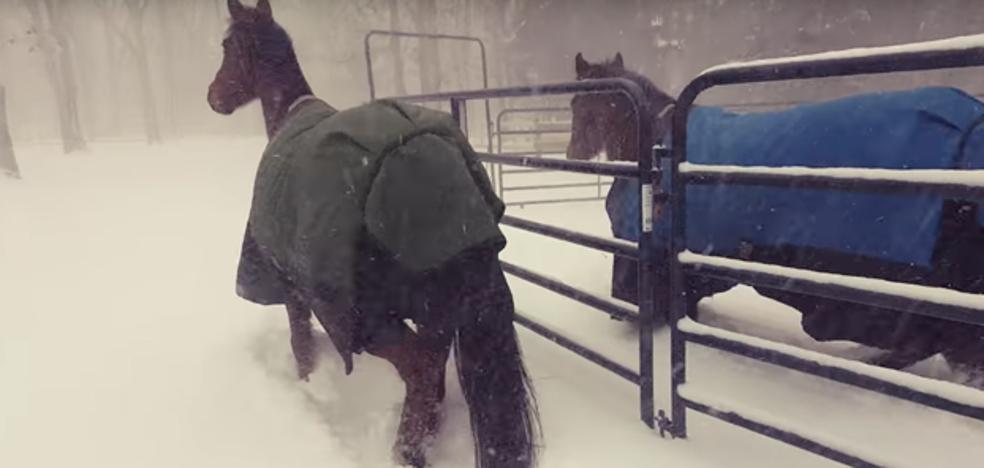 La inesperada y cómica reacción de dos caballos al ver la nieve por primera vez