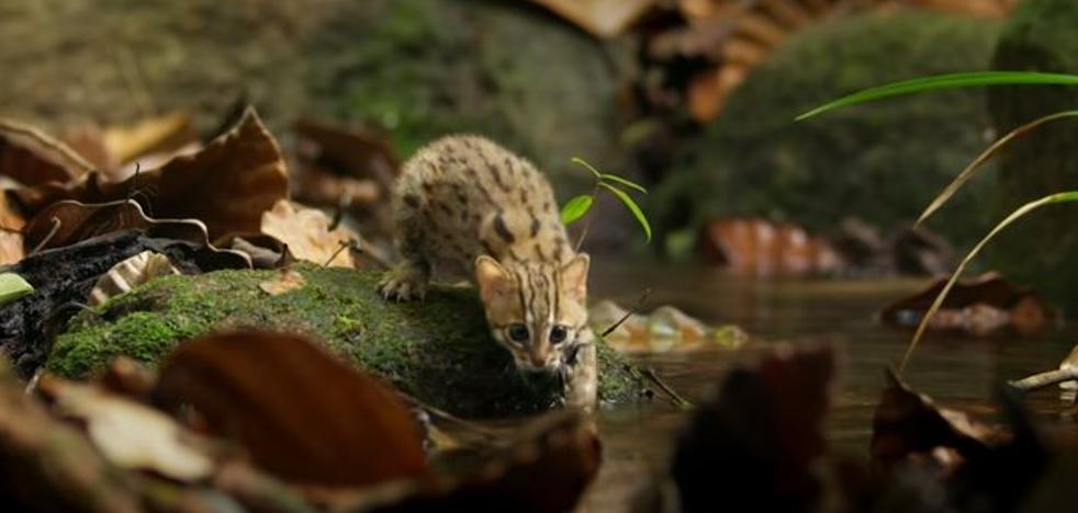 El adorable y minúsculo gato que arrasa en las redes