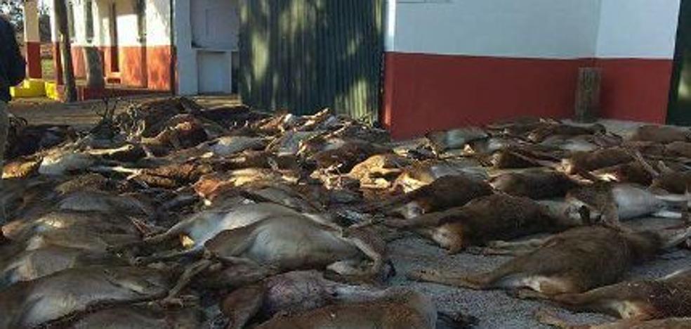 """Denuncian una """"matanza masiva"""" de ciervos y muflones para regenerar la zona afectada por un incendio en Huelva"""