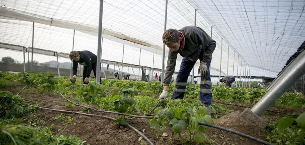 Un proyecto de Cáritas forma a desempleados en cultivo ecológico en la Vega de Granada