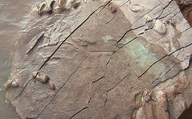Descubren huellas de tortugas de hace 227 millones años en la Cordillera Ibérica