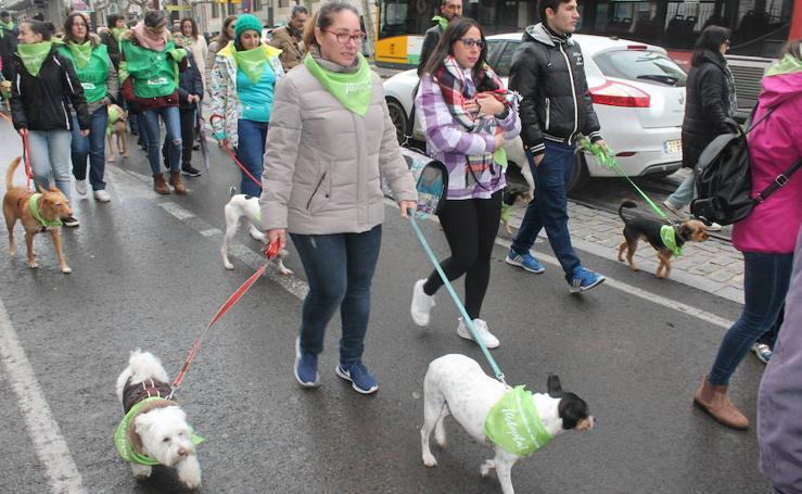Jornada de preadopción de perros