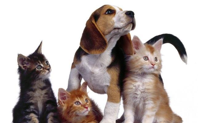 ¿Cuánto cuesta mantener un perro al año? ¿ Y un gato?