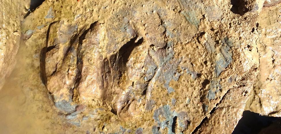 Huellas de tortugas de 227 millones de años