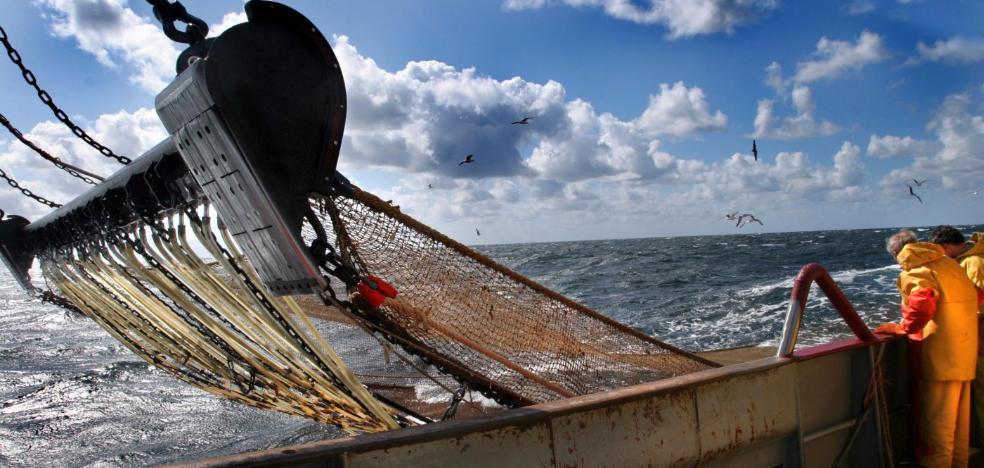 """Fin a la pesca eléctrica que """"destruye el mar y su fauna"""", según los ecologistas"""