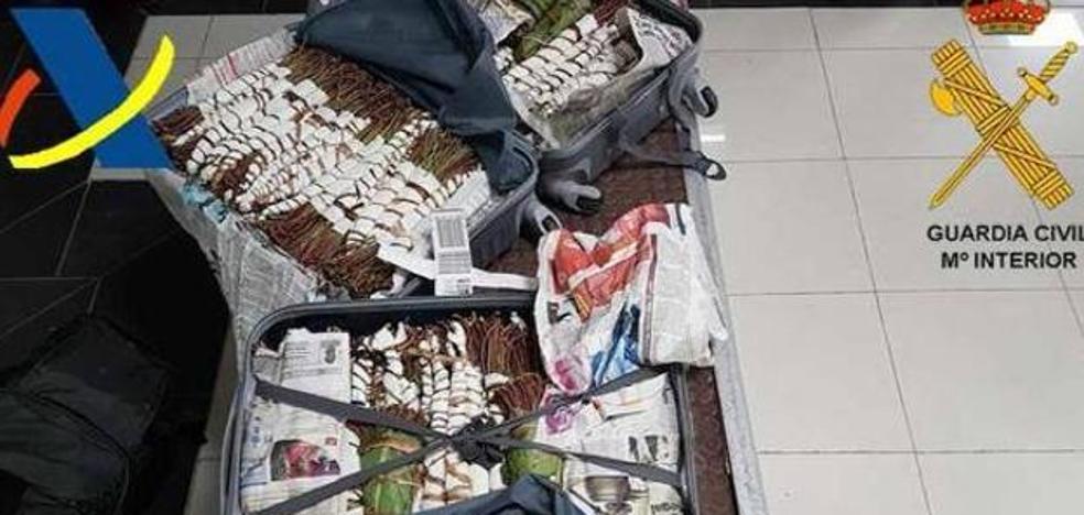 Alerta: llega a España el khat, la 'cocaína africana'