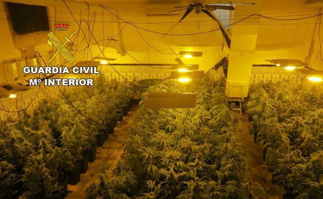 Detienen al regente de una plantación con 151 plantas de marihuana en Roquetas de Mar