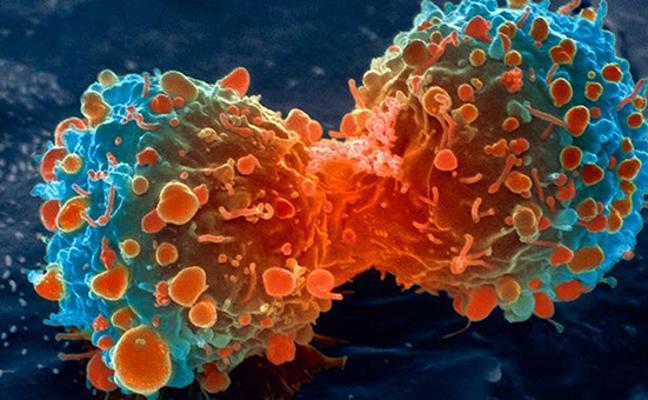 Hito histórico: un test de sangre permite la detección temprana de 8 tipos comunes de cáncer