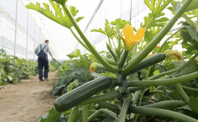 Agro transformación digital, un reto para el sector hortofrutícola