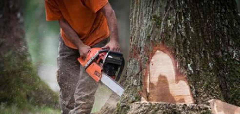 Tala un árbol de su casa y le caen 100.000 euros de multa