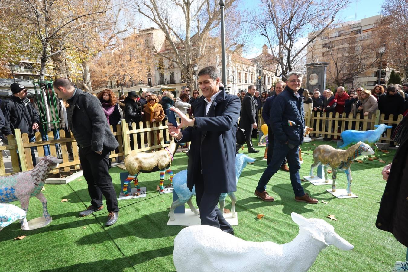 Exposición de corderos en Puerta Real