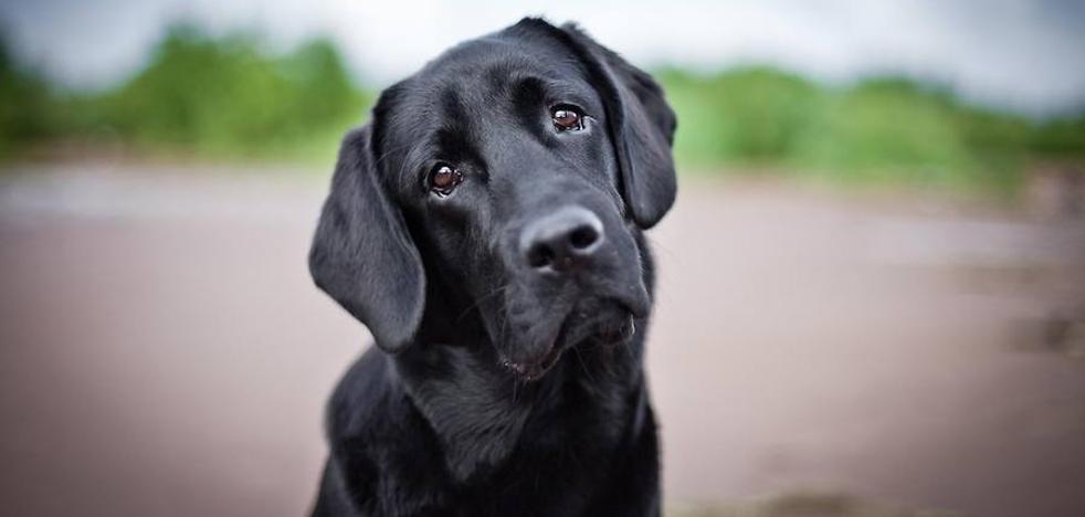 Piden firmas para evitar la masacre de perros de cara al próximo Mundial de Rusia