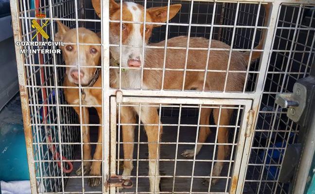 Dos personas investigadas por la sustracción de 6 perros de caza valorados en unos 3.000 euros