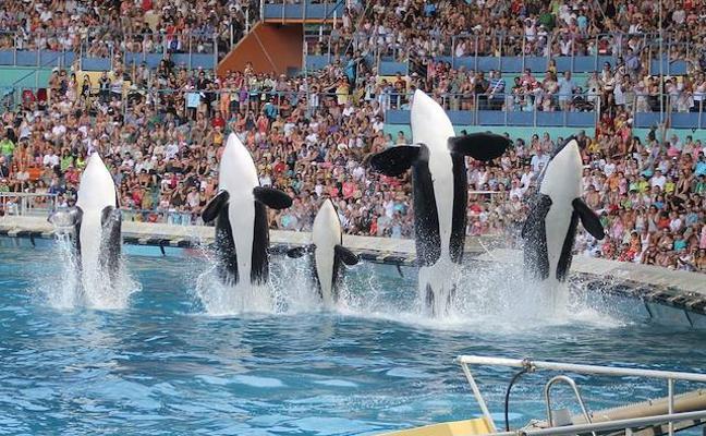 Una orca logra imitar el lenguaje humano y aprende a decir 'hello'