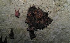 Les piden año y medio de cárcel y 135.000 euros de indemnización por matar murciélagos en la UJA